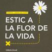 Samarreta Estic a la flor de la vida - Temps de Flors